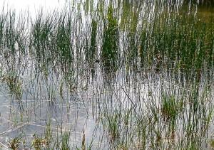 Lac de st cyr près de Poitiers