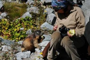 Marmotte du Glacier Blanc
