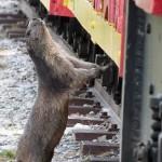 Un petit coucou au petit train d'Artouste en Béarn !