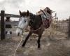 Unbranded_Horse-EOFT_slide
