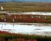randonnée cézallier auvergne